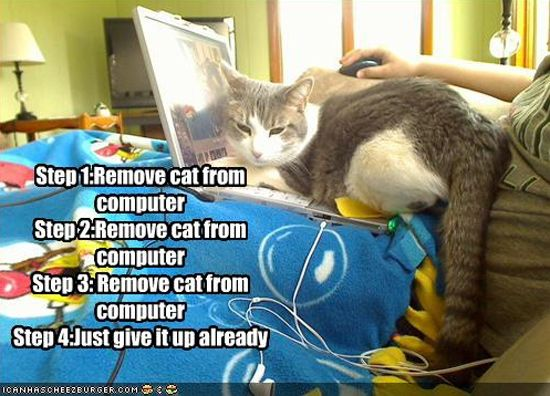 How Cats and Dogs are Playing with Computers?